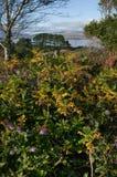 Цвета осени в западной пробочке Стоковое Фото