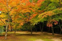 Цвета осени в Киото Стоковые Фотографии RF