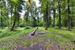 Цвета осени в лесе Москвы Стоковая Фотография RF