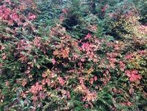 цвета осени в листьях Стоковое Изображение RF