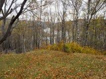 Цвета осени в Румынии Стоковое Изображение