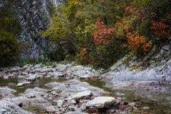 Цвета осени в ущелье реки Cuago Стоковые Изображения