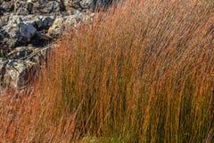 Цвета осени в seagrass в Новой Зеландии стоковое изображение rf