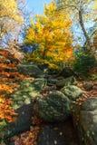 Цвета осени - дерево и валуны Стоковое фото RF