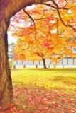 Цвета осени деревьев Momiji в Киото Стоковые Фото