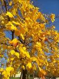 Цвета осени золотые стоковое изображение rf