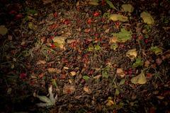 Цвета осени кустов Стоковая Фотография RF