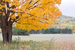 Цвета осени, Мичиган, спать соотечественник медведя Lakeshore Стоковые Изображения