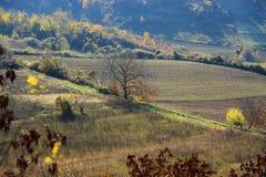 Цвета осени на гористой обрабатываемой земле Стоковое Изображение RF