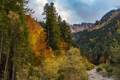 Цвета осени на деревьях в горных вершинах Стоковая Фотография RF
