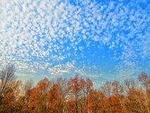Цвета осени на лесных деревьях под Cloudscape стоковые фотографии rf