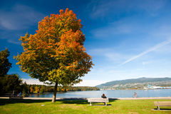Цвета осени - парк Стэнли, Ванкувер Стоковое Фото