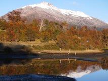 Цвета осени субполярных лесов бука острова Navarino, Чили - лесов world's самых южных Стоковые Фотографии RF