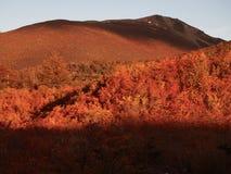 Цвета осени субполярных лесов бука острова Navarino, Чили - лесов world's самых южных Стоковые Фото