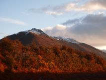 Цвета осени субполярных лесов бука острова Navarino, Чили - лесов world's самых южных Стоковые Изображения