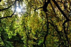 Цвета осени - через листья Стоковые Фотографии RF