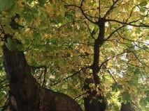 Цвета осени/Fall4 Стоковое фото RF