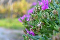 Цвета осени Koper Словении Стоковое фото RF