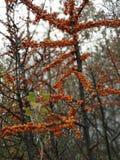 Цвета от ноября стоковые изображения rf