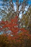 Цвета падения - лиственные листья стоковое фото