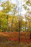 Цвета падения в древесинах Стоковая Фотография RF