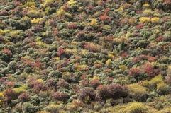 Цвета падения и кустарники горы Стоковая Фотография RF