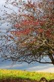Цвета падения национального парка луга неба Стоковое Изображение