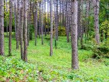 Цвета падения на деревьях Стоковые Изображения RF