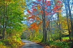 Цвета падения на дороге горы Стоковые Изображения