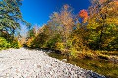 Цвета падения на удаленном потоке в Catskills Стоковая Фотография