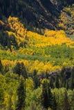 Цвета падения осени осины Колорадо стоковое фото rf