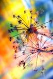 Цвета падения осени Стоковое Фото