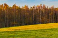 Цвета падения древесин полей взгляда ландшафта осени Стоковые Фото