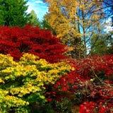 Цвета падения Сиэтл Стоковые Фото