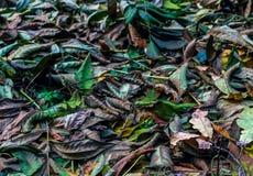 Цвета падения с сухими листьями осени Стоковая Фотография