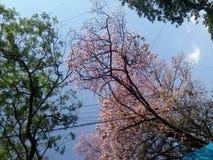 Цвета природы Стоковые Фото