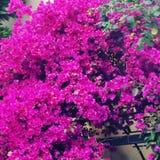 Цвета природы Стоковые Фотографии RF