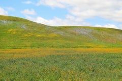 Цвета холма Стоковая Фотография RF