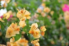 Цвета цветка весны Стоковое Изображение