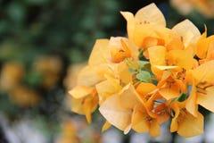 Цвета цветка весны Стоковые Фото