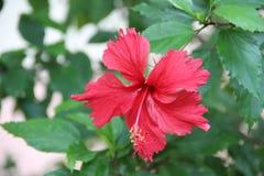 Цвета цветка весны Стоковая Фотография RF
