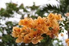 Цвета цветка весны Стоковое Изображение RF