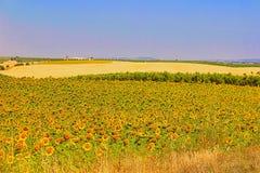 Цвета Alentejo лета Стоковая Фотография