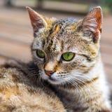 Цвета brigh кота головные Стоковые Изображения