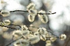 Цветене весны Стоковое фото RF
