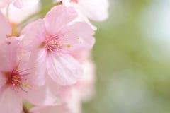 Цветене весны Стоковые Фотографии RF