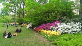 Цветене весны Стоковые Фото