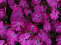 цветене вполне Стоковое фото RF