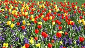 Цветене времени весны видеоматериал