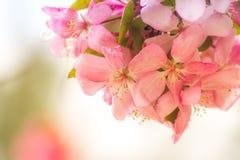 Цветене времени весны Стоковое Изображение
